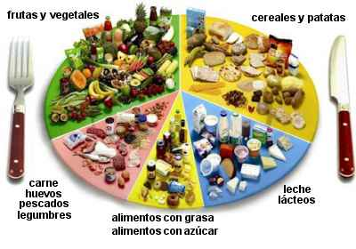 essential nutrients essay